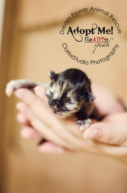 Kitten, DreamPower, HeARTS speak, 2013