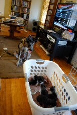 Asher and the kittens, 2011