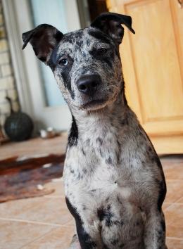Asher, 5 months