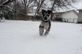 Asher, Snow in Waco, Texas