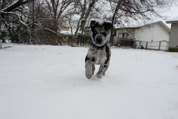Asher, Snow in Waco, Texas