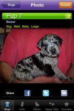 Shelby Clarke Blog   Asher Catahoula pound puppy photo