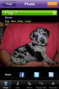 Shelby Clarke Blog | Asher Catahoula pound puppy photo