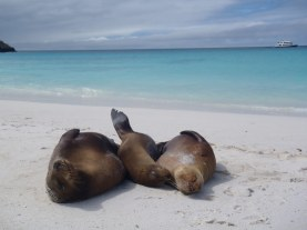 Sea Lions on the Beach, Galapagos Islands