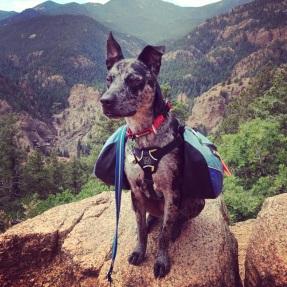 Asher hiking Mt Cutler, 2013