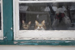 Charlie and Sherwin watching us play in the Snow