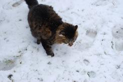 Sherwin in the Snow
