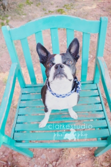 Bella, Colorado Springs Pet Photography 2013