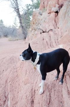 Bella, Colorado Springs Pet Photography 2013