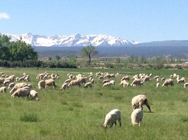 San Juan Mountains from Montrose, Spring 2014