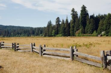 Run in the Redwoods, 2014