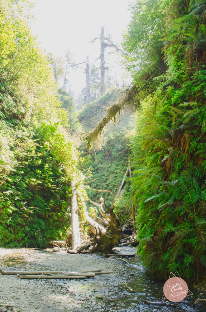 Fern Canyon Hike, 2014