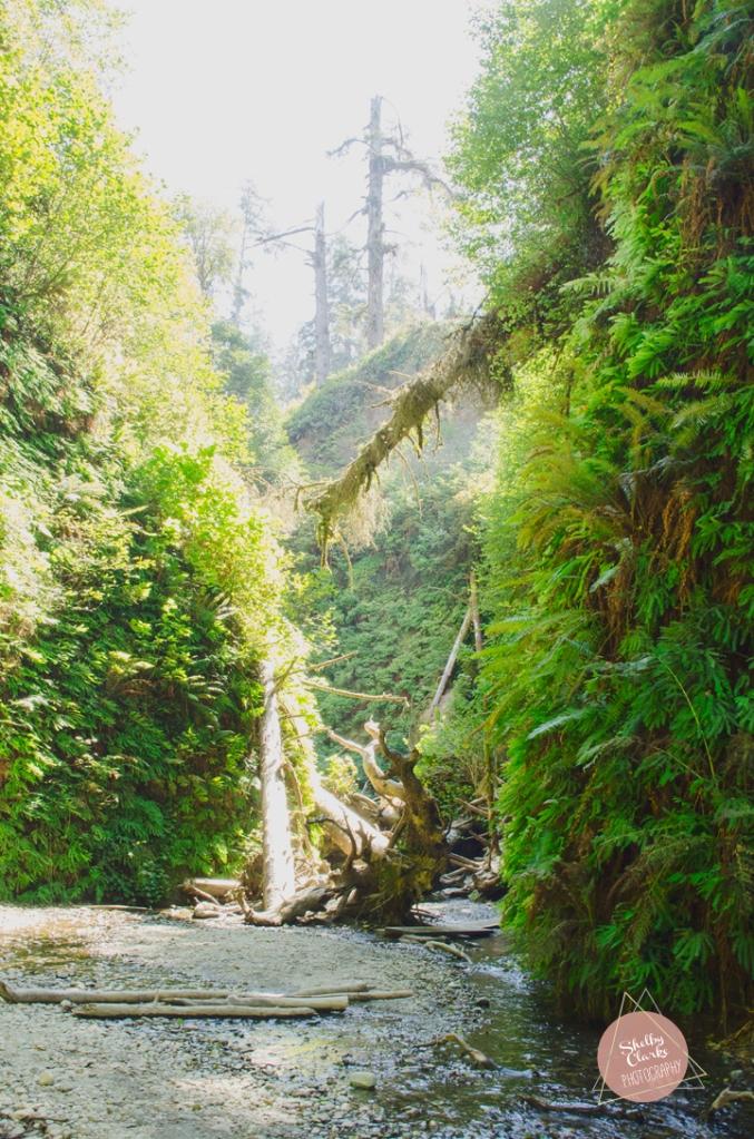 Fern Canyon Hike, 2014