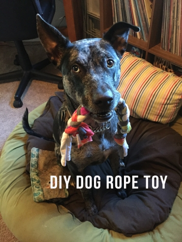 Shelby Clarke Blog | DIY Dog Toy
