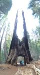 Sequoia Grove at Yosemite
