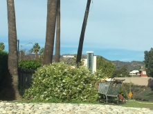 My photo of the Hollywood sign from the highway