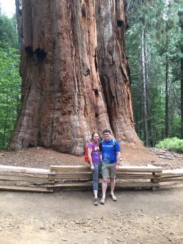 Sequoia Grove |Yosemite